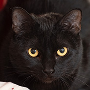 Adopt Pepper the cat available for adoption from Best Friends Animal Sanctuary