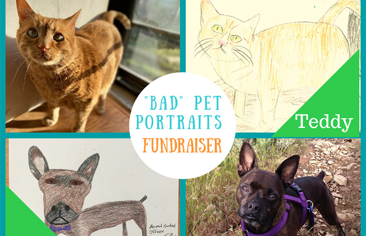 Bad Pet Portrait Fundraiser advertisement for Salt Lake County Animal Services featuring Zelda the dog and Teddy the cat