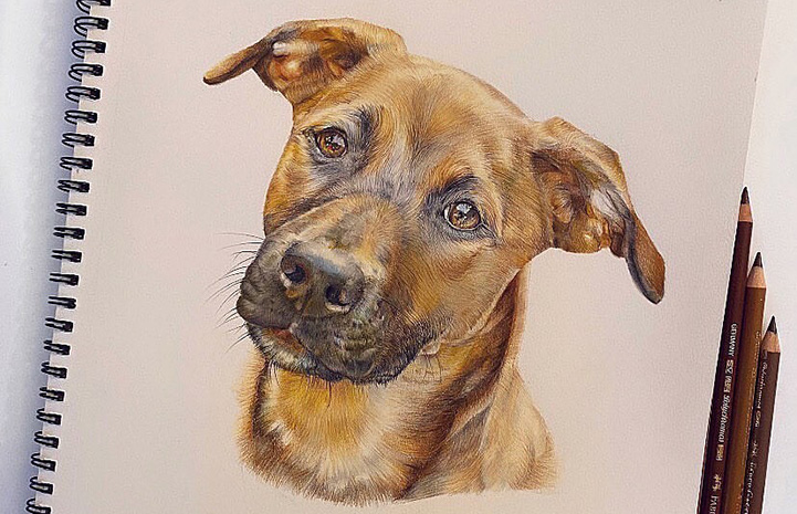 Lifelike and detailed drawing of a brown dog