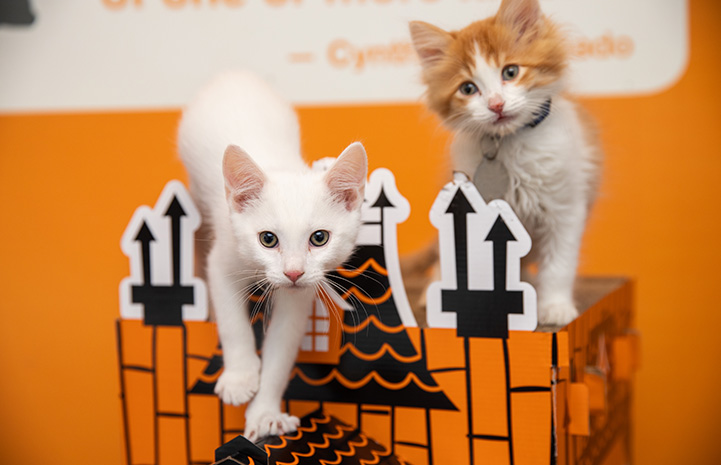 Two kittens playing on a haunted house toy
