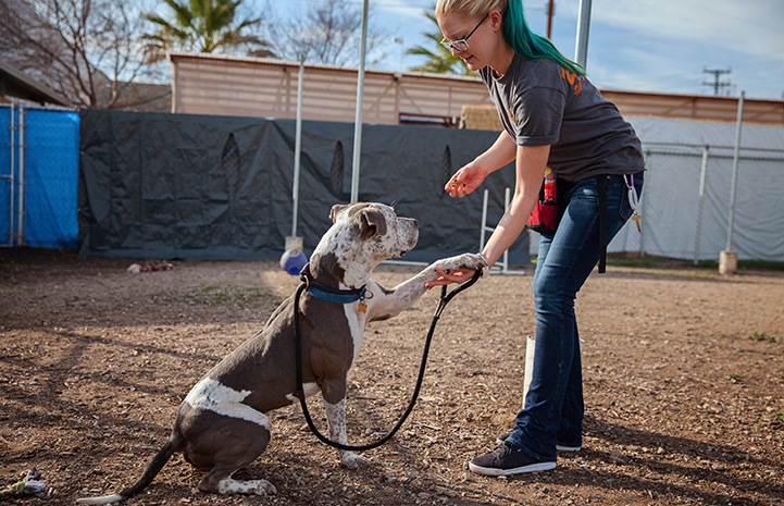 Raleigh gets a good training session in at the Best Friends Pet Adoption and Spay/Neuter Center in Los Angeles