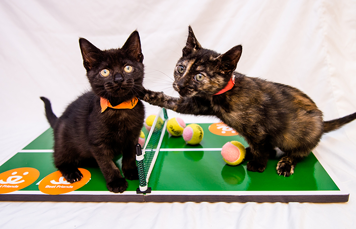 It's tennis lessons for these two kittens