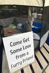 "Kitten in a playpen with a sign that says, ""Come Get Some Love From a Furry Friend"""
