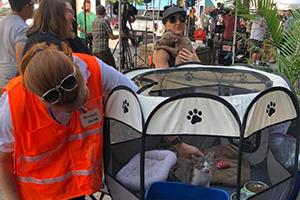 Woman wearing an orange safety vest petting a kitten in a playpen