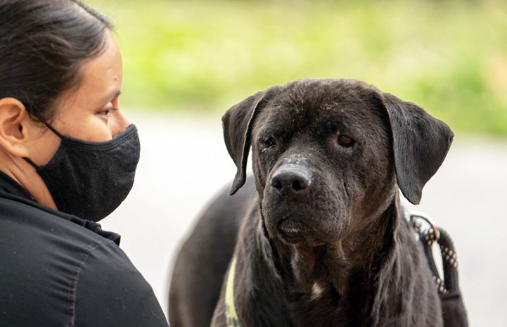 Masked person looking at Miss Rogers the dog