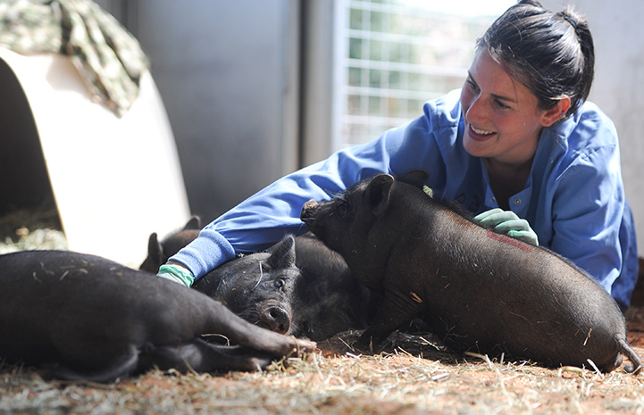 Caregiver Rosalie Wind lying down with a litter of potbellied piglets