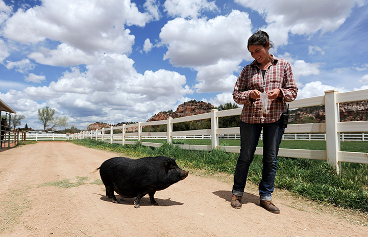 Kit the potbellied pig talking a walk with caregiver Rosalie