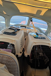 Animals being transported in kennels on the Pilots N Paws flight