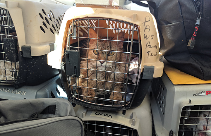 Cat in a carrier on a compassion flight through Pilots N Paws, with other carriers with animals surrounding her