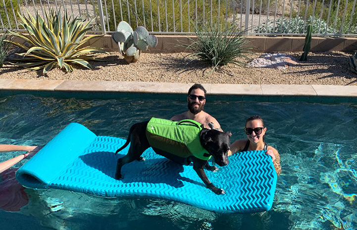 Patrick the dog on a blue float in a pool next to two people