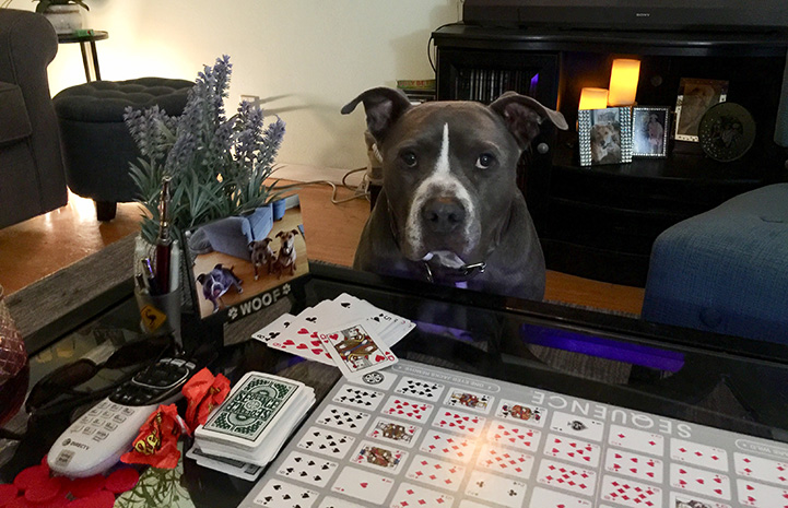Gary the dog sitting next to a table set up with a card game