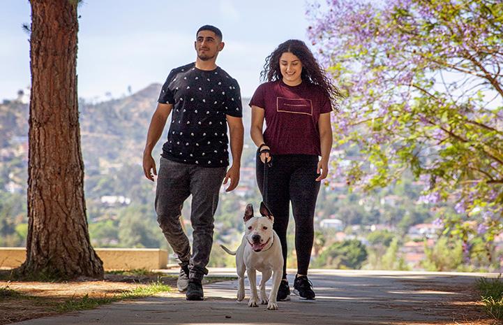 Meg and Eric Sedrakyan taking Boo the dog for a walk