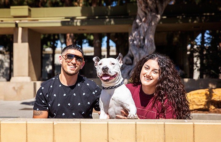 Boo the pit bull terrier with his adopters, Meg and Eric Sedrakyan, behind a small wall in front of a tree and building