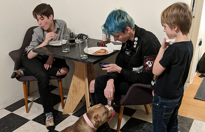 Midge the pit bull terrier with three boys in her new family