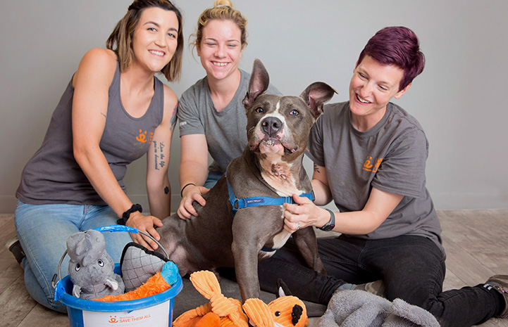 Tyson the dog with three women, a bucket with his list and lots of toys