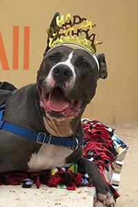 Tyson the dog wearing a Happy Birthday hat