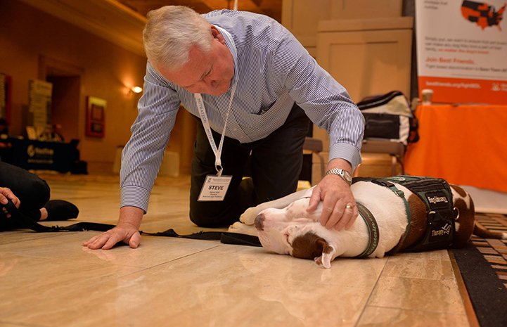 Captain Cowpants the dog lying on the ground being petted by a man at the IMLA Conference