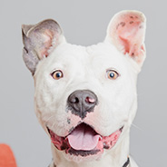 Adopt Poppy the dog available for adoption from Los Angeles