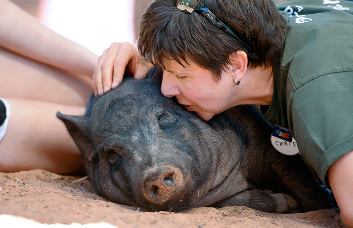 Potbellied pig being kissed by a woman volunteer