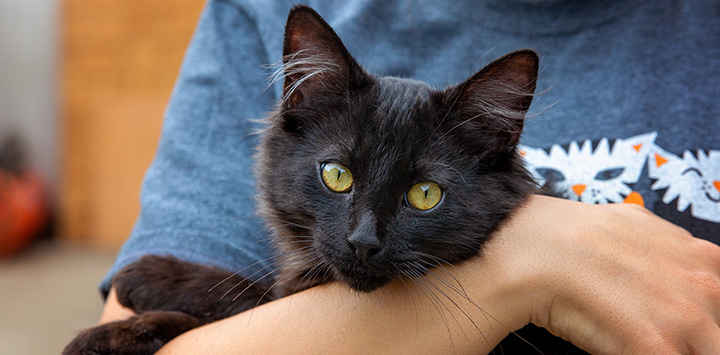 Person holding a black cat in his or her arms