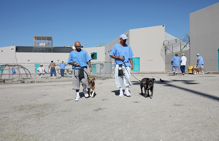 Paws For Life K9 Rescue prison program participants walking dogs in the yard