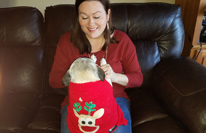 Piper the pug wearing a Christmas sweater up on Brandy's lap