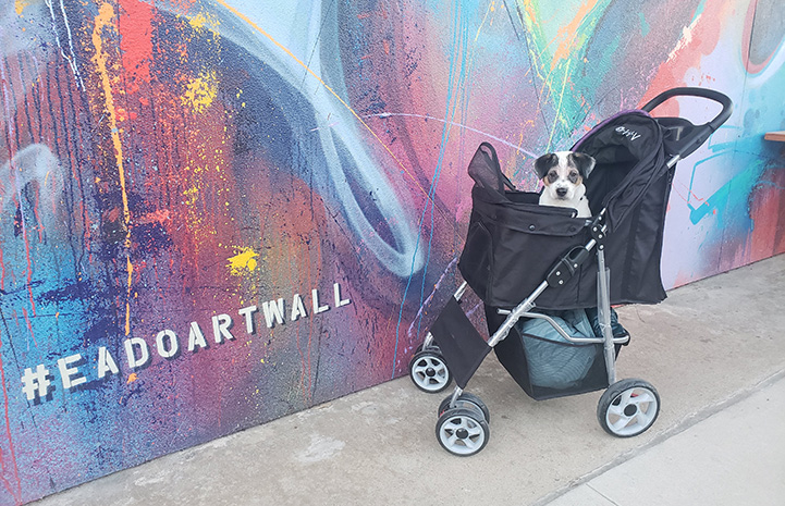 Link the puppy in a stroller in front of a colorful mural on a wall