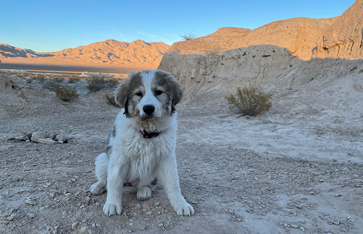 Lulu the puppy outside with red cliffs in the background