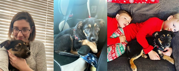 Collage of three photos of Lulu the puppy: snuggling with woman, in a car seat, and snuggling with two toddlers on a couch