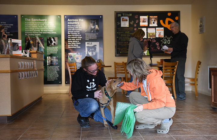 Once he learned to walk on a leash, Rubiks the dog started venturing out on outings to the Best Friends Welcome Center