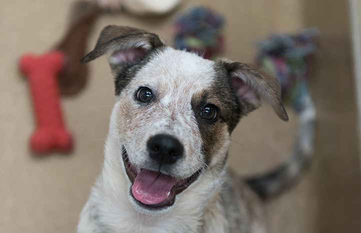 Loka the puppy adopted from Best Friends