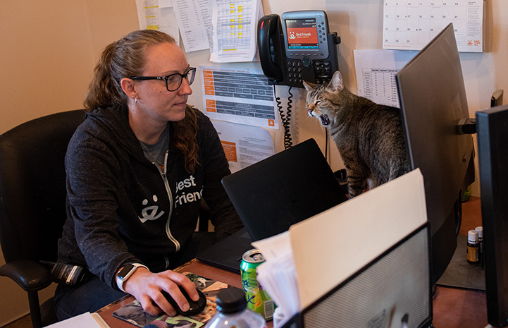 Svetlana the cat yawning while sitting on the desk next to Cat World manager Amy Kohlbecker