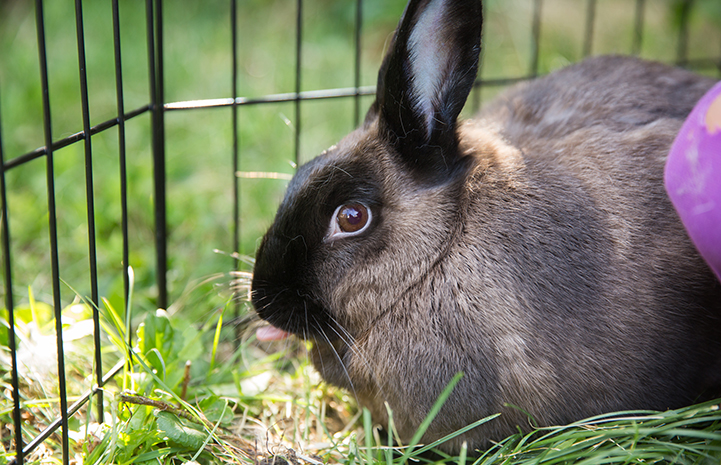 Fauna, the now happily adopted rabbit