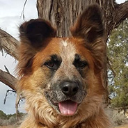 Adopt Racko the dog available for adoption from Kanab