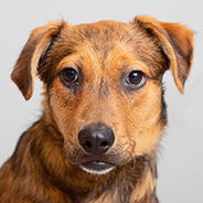 Adopt Rainbow Dash the dog available for adoption from Los Angeles