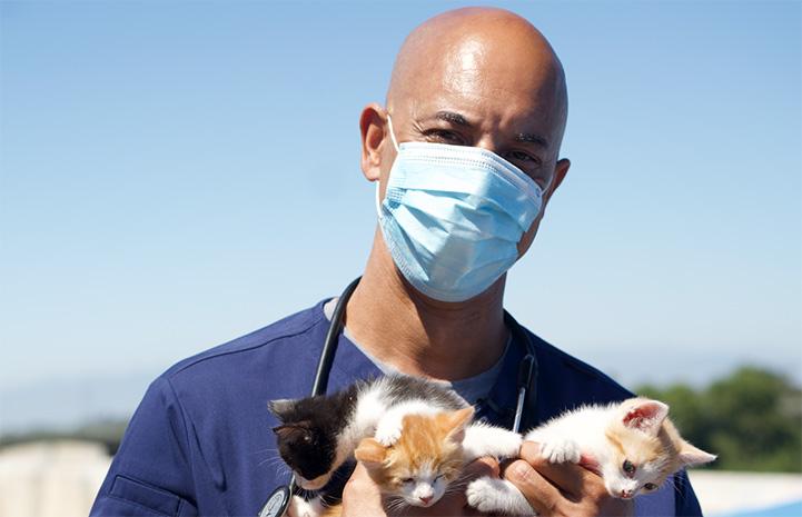 Dr. Kwane Stewart holding a litter of three kittens