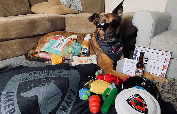 Former military dog wearing glasses and surrounded by items donated to him
