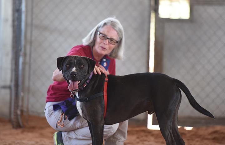 Sosa, a black and white Labrador retriever mix, in front of caregiver Jane