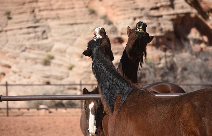 Refeeding Malnourished Starved Horse | Best Friends Animal