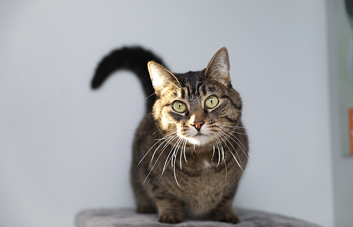 If you do need to find a new home for a cat, like this beautiful tabby, or dog, you'll want to advertise as widely as you can, in as many places as possible
