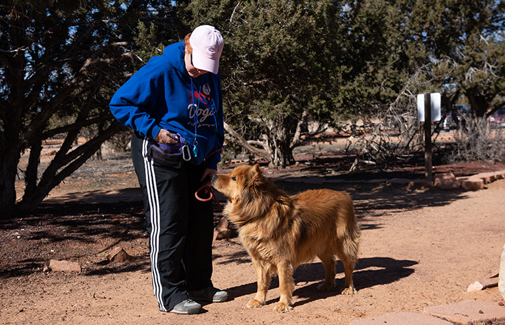 Jacko the Chow dog out on a walk with a woman who is reaching into a pouch to give him a treat
