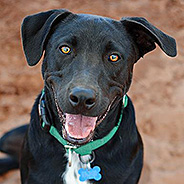 Adopt Roady the og available for adoption from Best Friends Animal Sanctuary