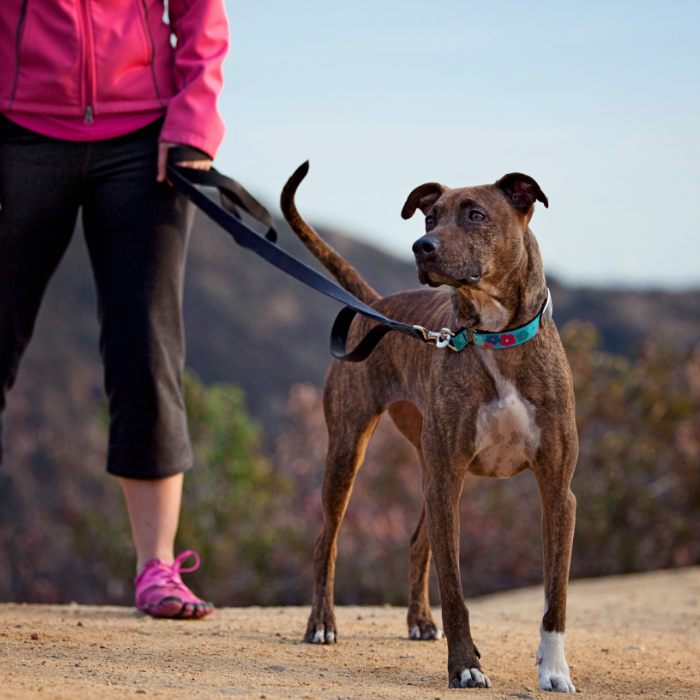 Girl getting ready to go on a run with a dog