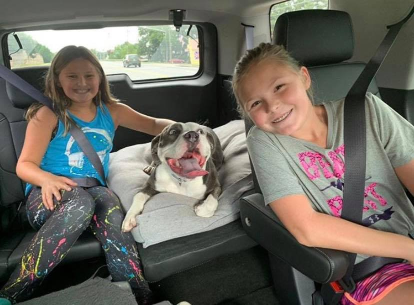 Roxy the dog sitting in the back seat of a car with two young girls