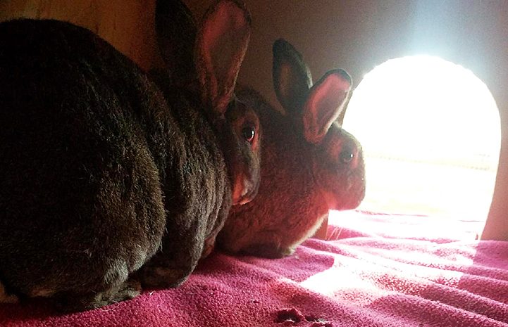 Nancy and Rusty the rabbits couldn't be a more perfect pair