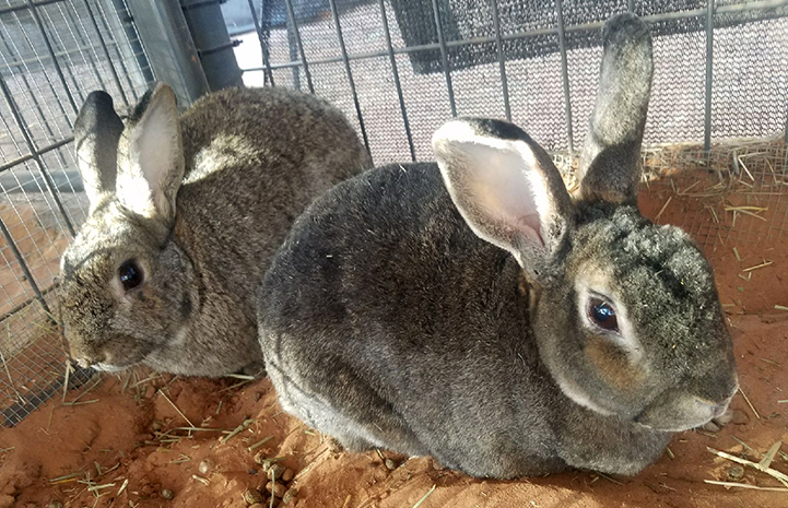"The two bunnies, Rusty and Nancy, have an ""ideal bond"""