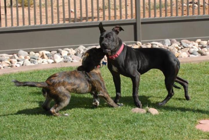 Mya the Vicktory dog socializing a puppy