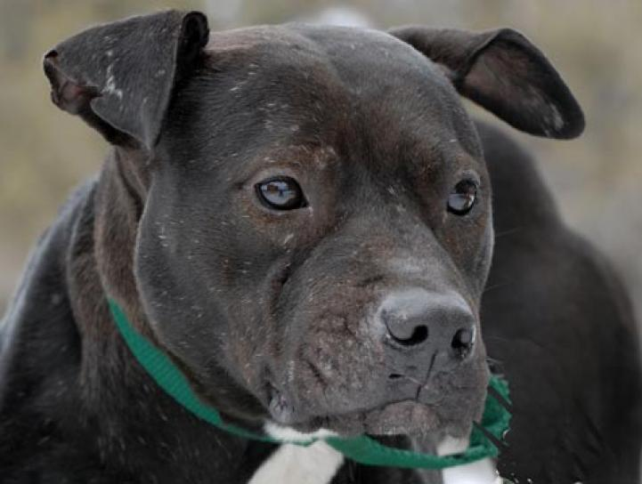 Bonita was a very special girl rescued from Michael Vick