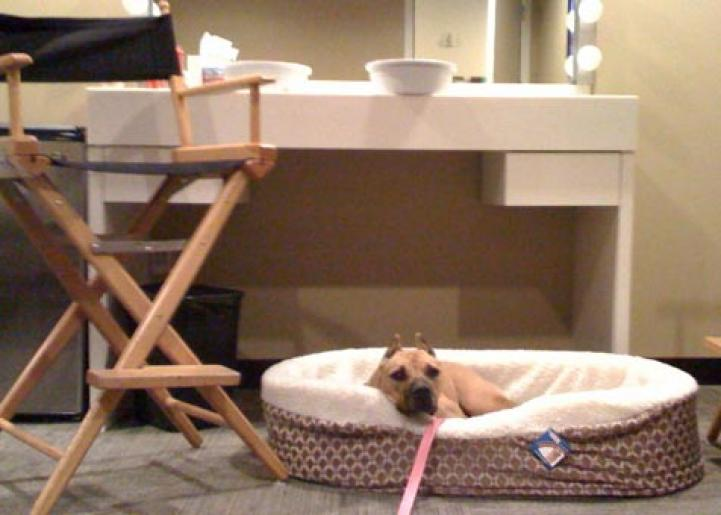 Georgia the Vicktory dog in her new bed at the 'Ellen DeGeneres Show'