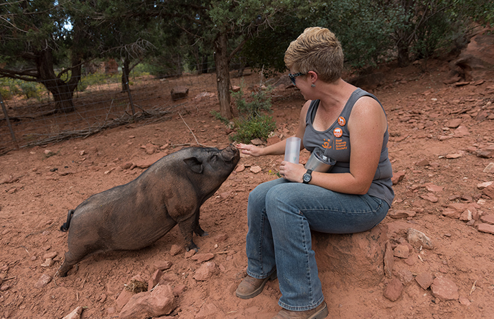 Smitty the pig with caregiver Marti